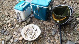 釣果天の川